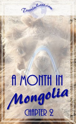 A Month in Mongolia Chapter 2 - Baby Camel
