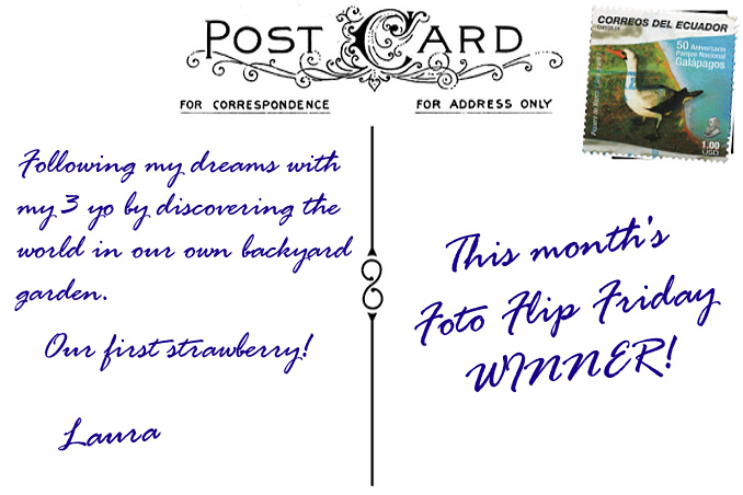 Foto Flip Friday Winner Laura NoCureForCuriosity My Own Backyard Postcard photo Back