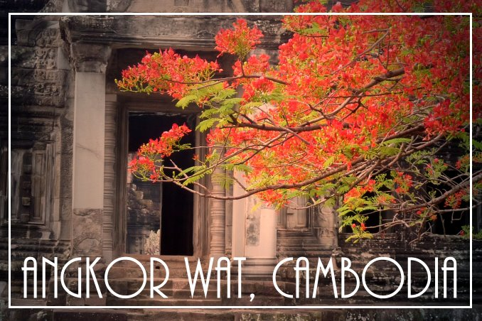 Foto Flip Friday March 2015 Theme: Blooms - Angkor Wat Blooms Postcard photo Front