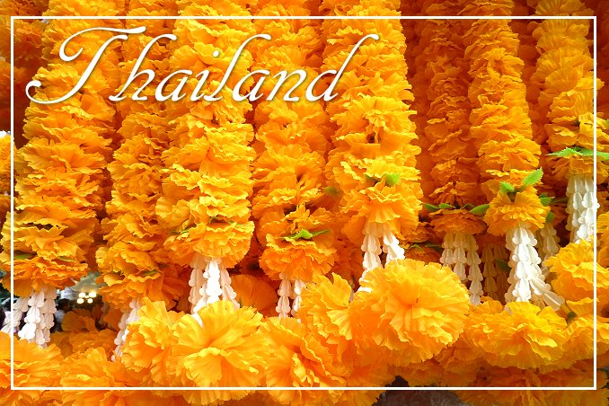Foto Flip Friday March 2015 Theme: Blooms - Thailand Marigold Blossoms Postcard photo Front