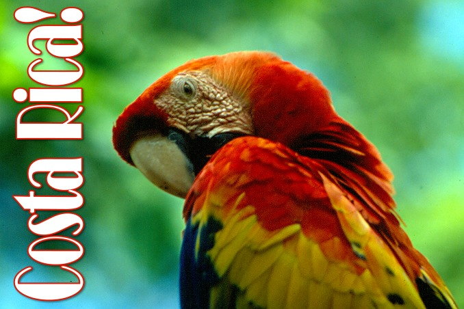 Foto Flip Friday June 2015 Theme: Red - Costa Rica Parrot Postcard photo Front