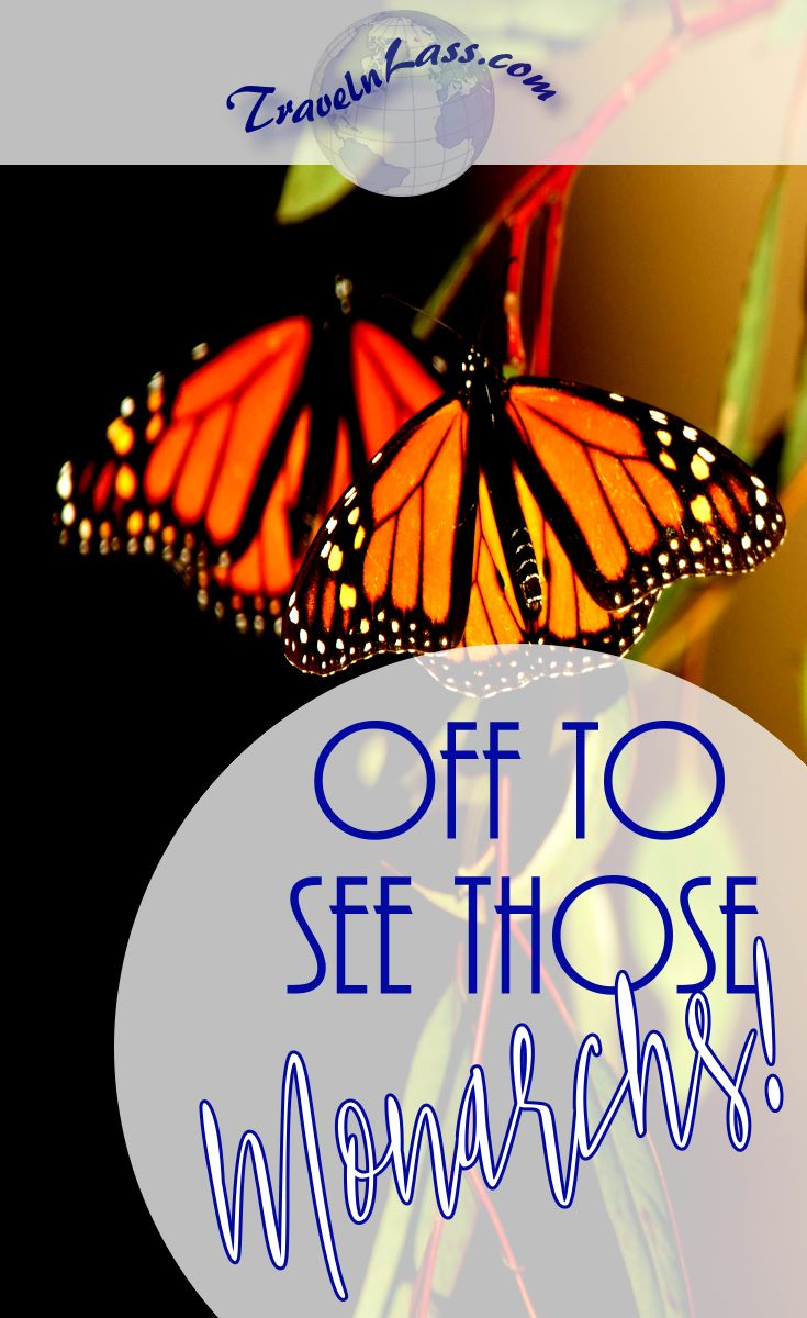 Taking (my own) Travel Advice: I'm off to see the Monarch butterly migration in Mexico!