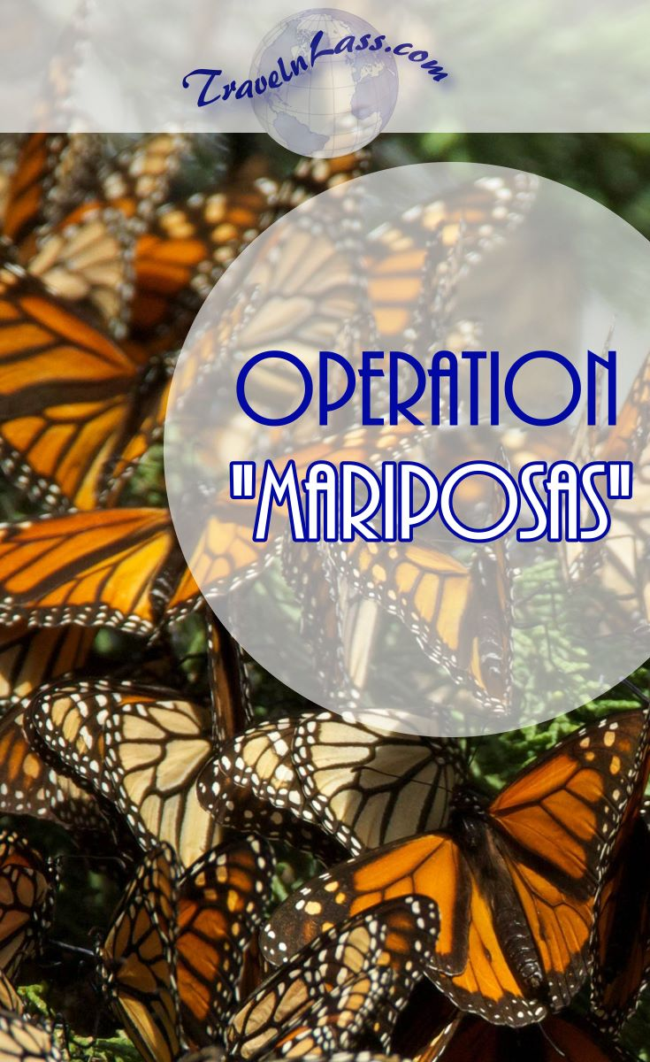 I'm finally going to see the legendary Monarch butterfly migration amid the forests of Mexico!