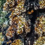 Rosario-Butterfly-Sactuary-15 (MEXICO: Butterflies DRIPPING from the Trees!)
